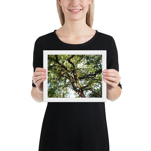 Tree Canopy Framed photo