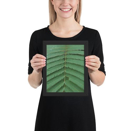 Green Plants Framed
