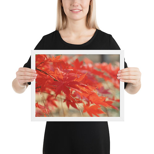 Maple Tree Framed photo