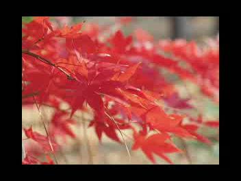 Trees by Joyce Kilmer narrated by Marlon Mayfield