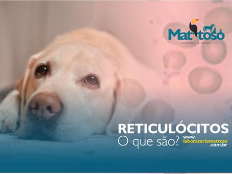Reticulócitos, o que são?