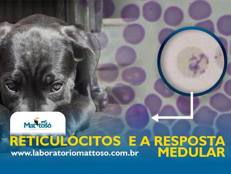 Reticulócitos e a resposta medular