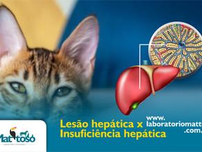 Lesão hepática x Insuficiência hepática