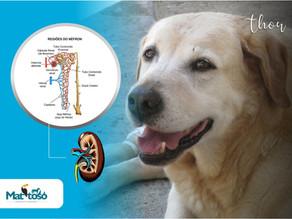 Relação proteína/creatinina urinária
