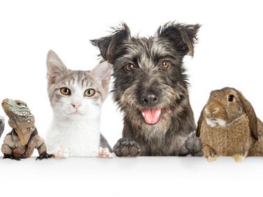 Pets and the Positive Influence They Have