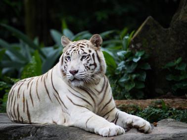 Raising Exotic Animals