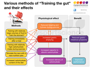 Methods to train the gut