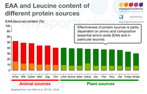 Animal versus plant proteins to stimulate muscle growth