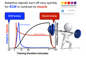 Adaptove signals for ECM and muscle