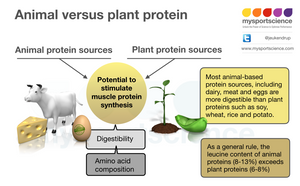 What is the best protein source?
