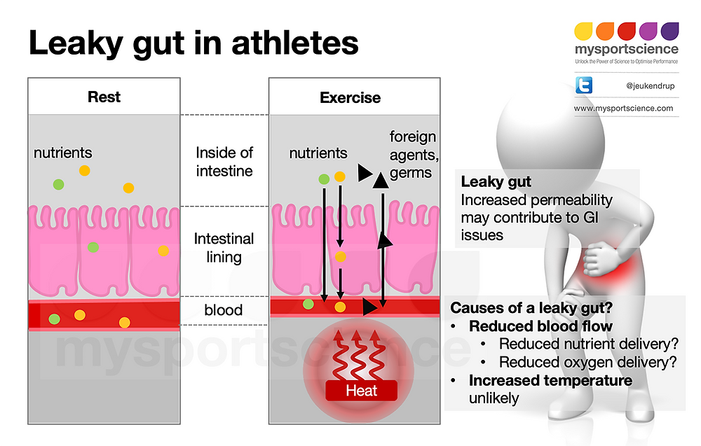 A health gut and a leaky gut during exercise