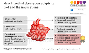 How intestinal absorption adapts to diet