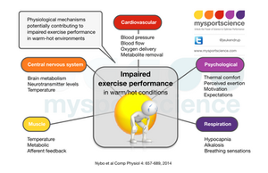 Mechanisms of impaired performance in the heat