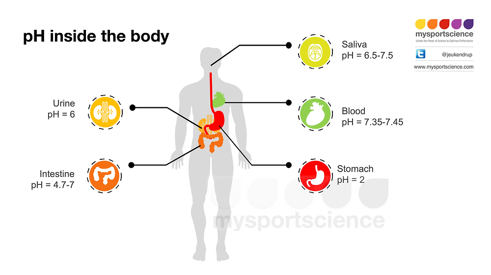 pH in the body