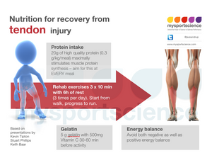 Nutrition for recovery from tendon injury