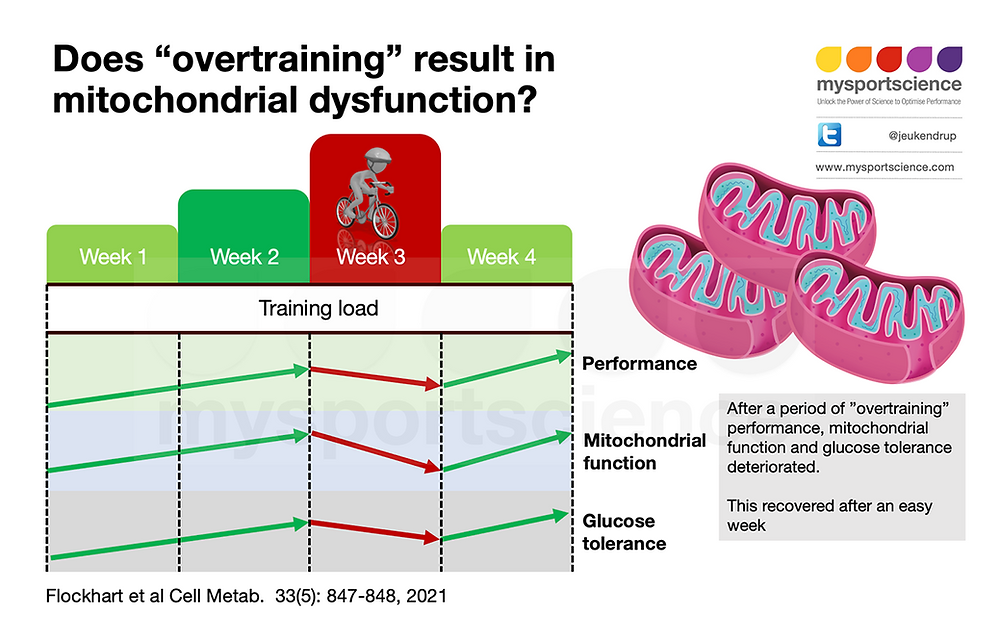 Overtraining decreases performance and mitochondrial function