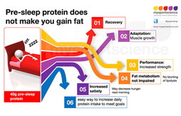 Presleep protein does not make you gain fat