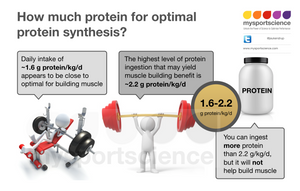 How much protein for optimal protein synthesis