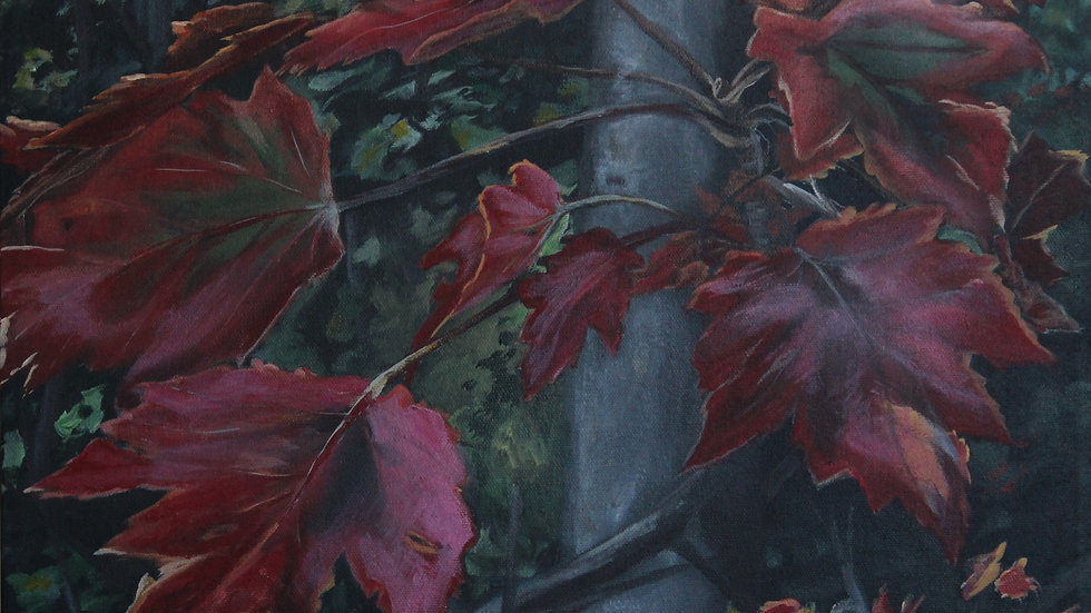 Les Belles feuilles d'érables