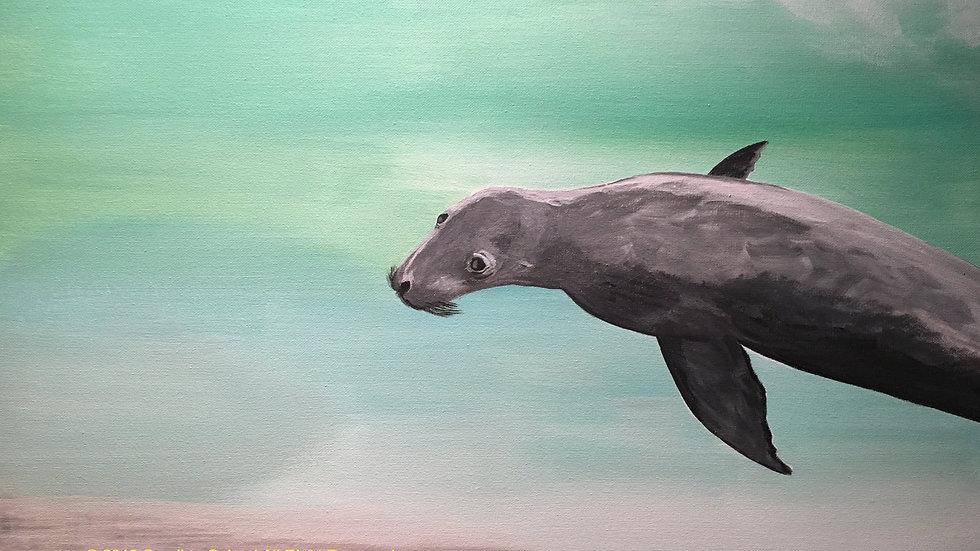 seal in turqoise water