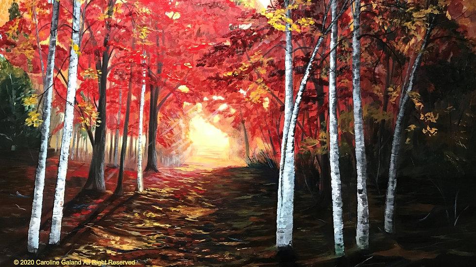 Autumn blast of colours