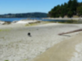 Mudge Island.JPG