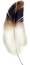 feather png.png