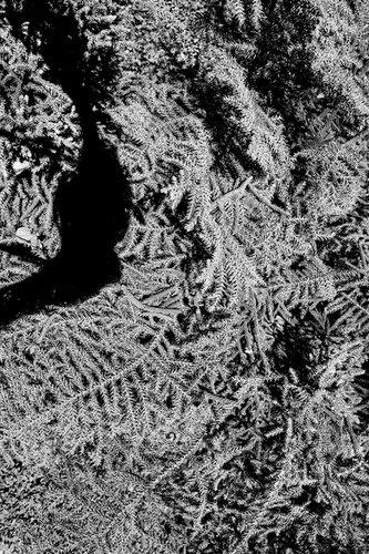 Angie Saiz Reflex. Un jardín y otras cosas que atesorar  Serie fotográfica | 2018-19   Impresión digital sobre papel algodón etching rag  60 x 40 cms c/u. © 2020