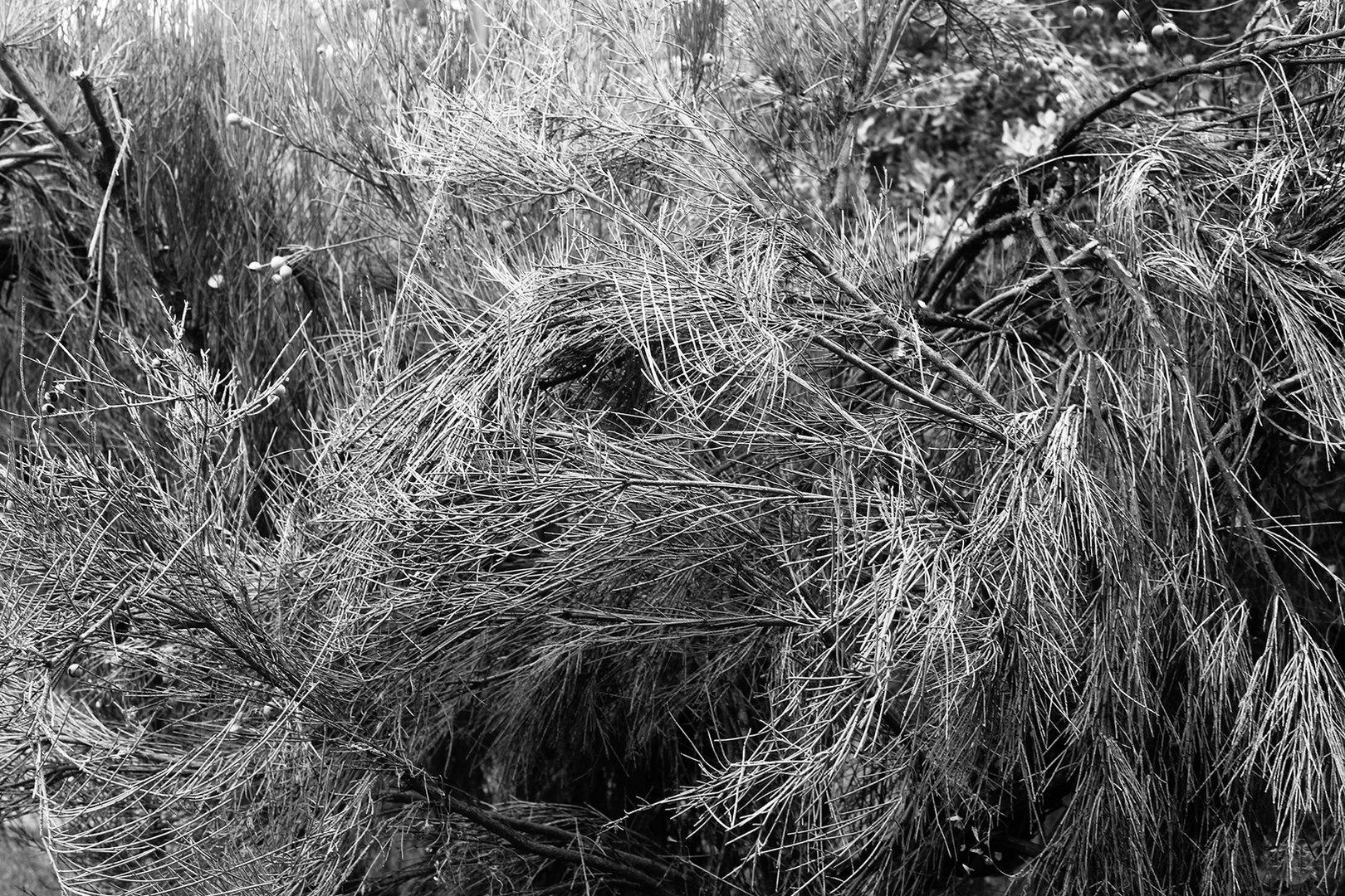 Angie Saiz Reflex. Un jardín y otras cosas que atesorar  Serie fotográfica | 2018-19   Impresión digital sobre papel algodón etching rag  40 x 60 cms c/u. © 2020
