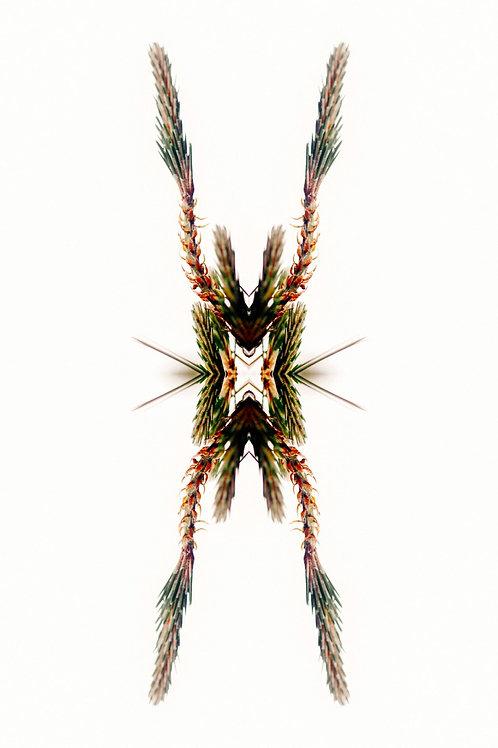 JETHRO MATHER JOO, Fractales de la naturaleza, 2020, edición única, 75x50 cm.