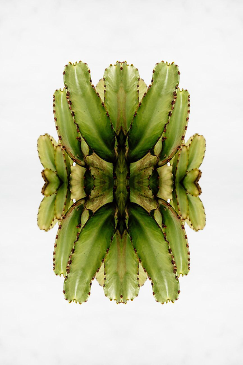 JETHRO MATHER JOO,  Fractales Naturaleza, 2017, 75x50 cm.