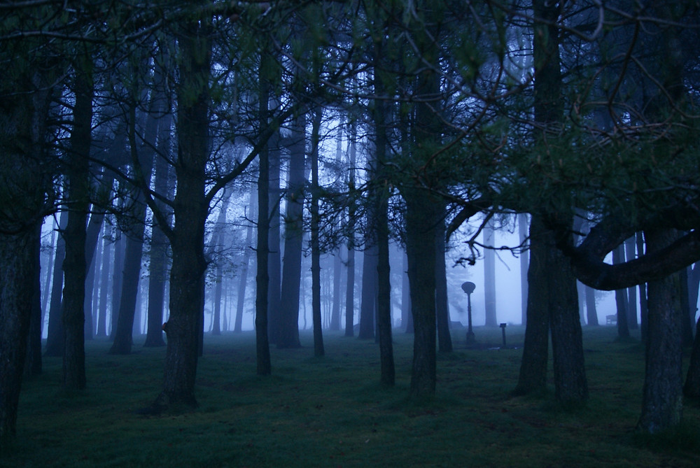 Misty view through trees on May Hill, Gloucestershire