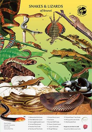 Snakes & Lizards of Brunei