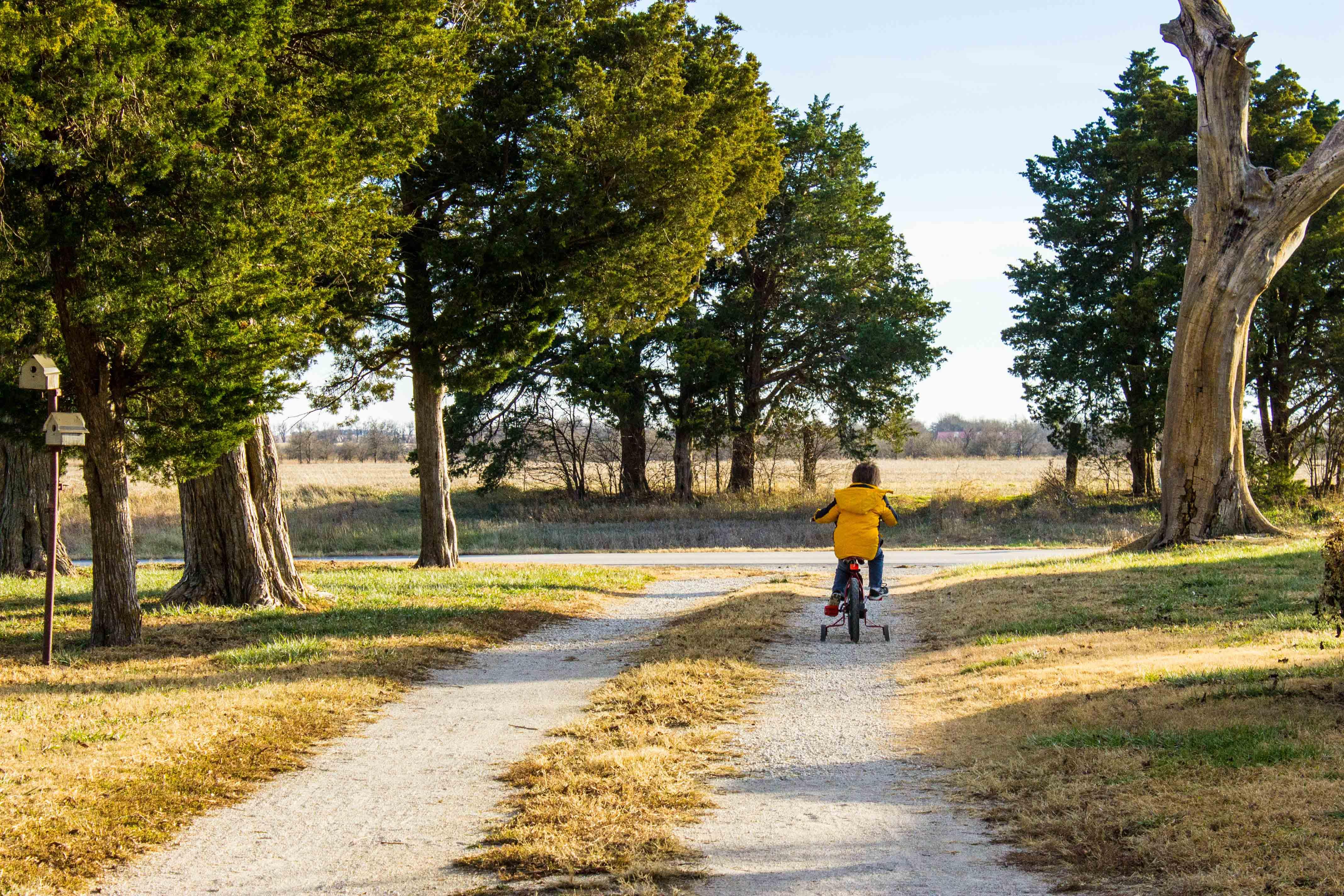 Untitled (Farm Driveway)