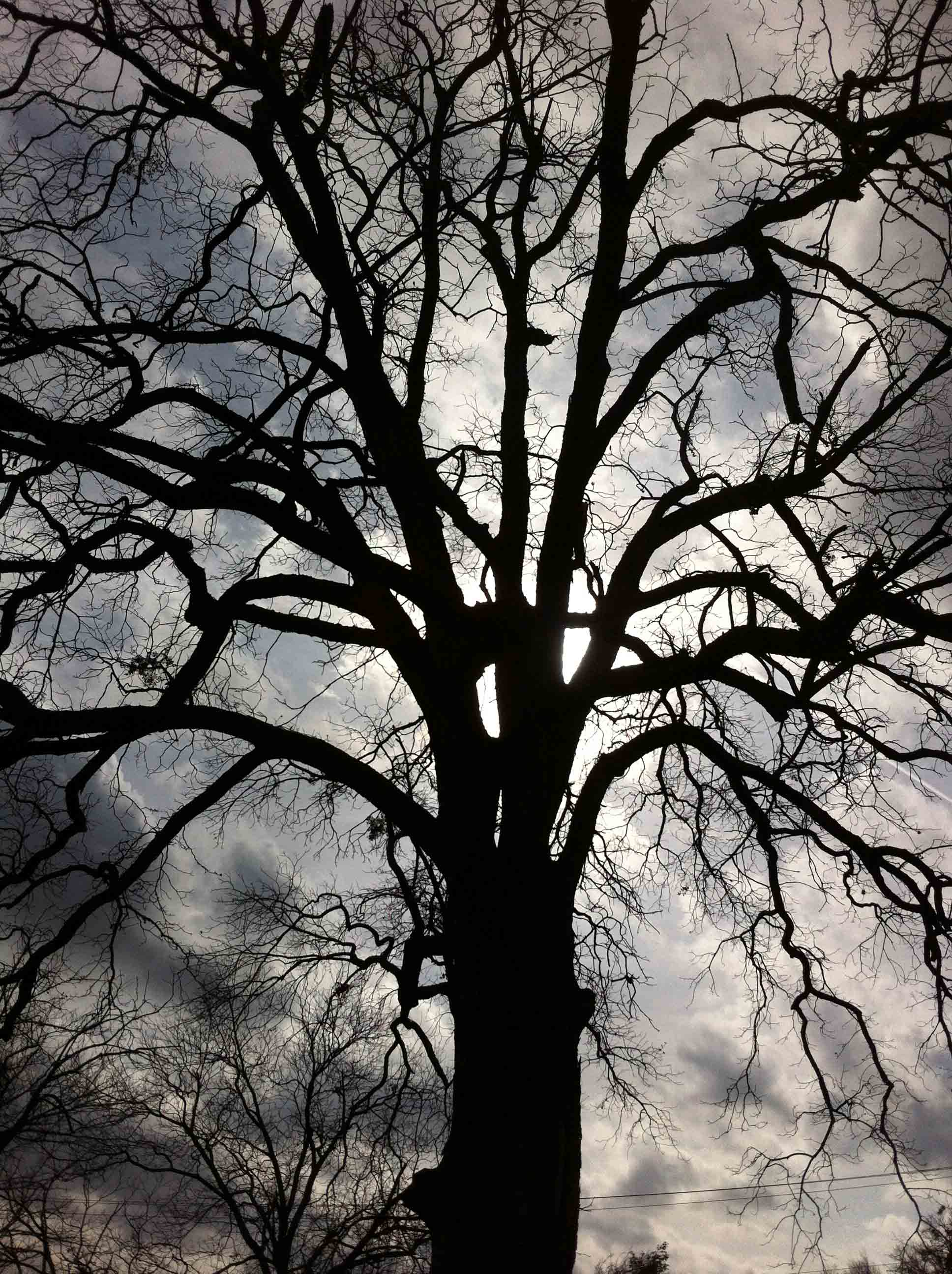 Untitled (Tree Silhouette)