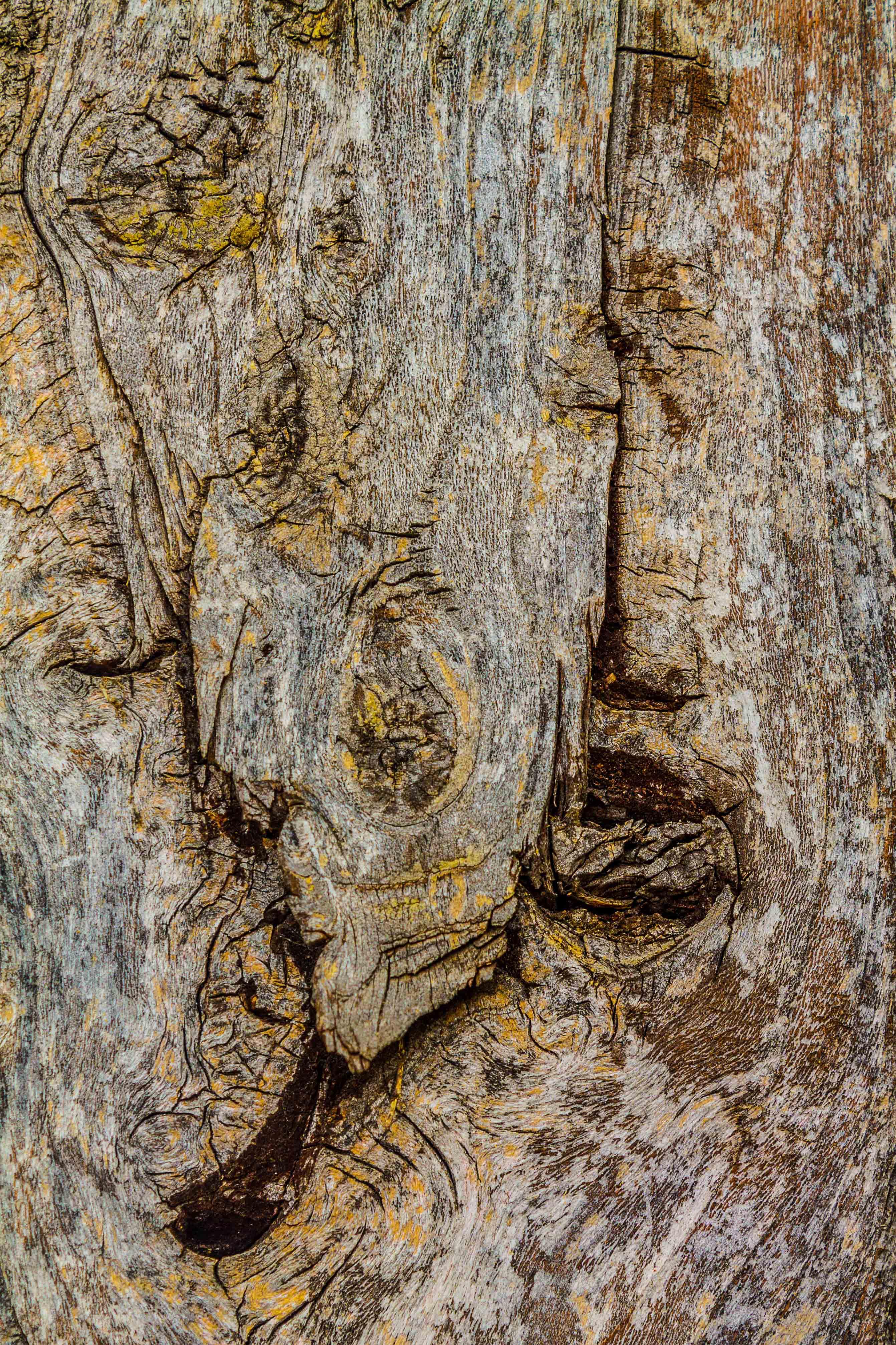 Untitled (Wooden Venom)
