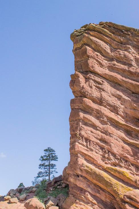 tall-rock-short-tree