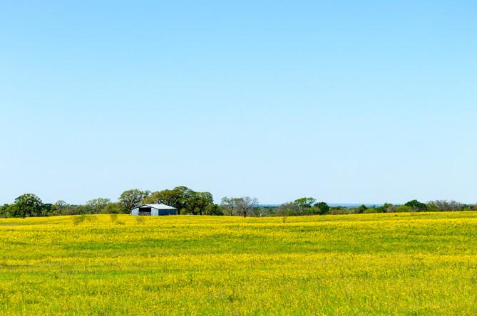 yellow-texas-pasture