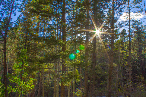 lens-flare-through-trees