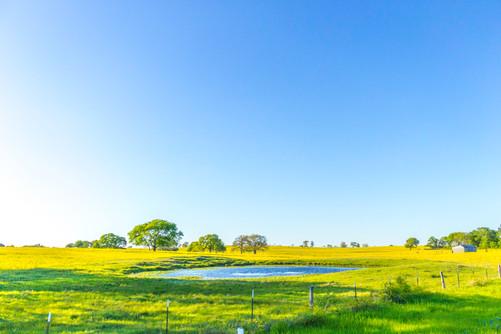 blue-sky-golden-pasture