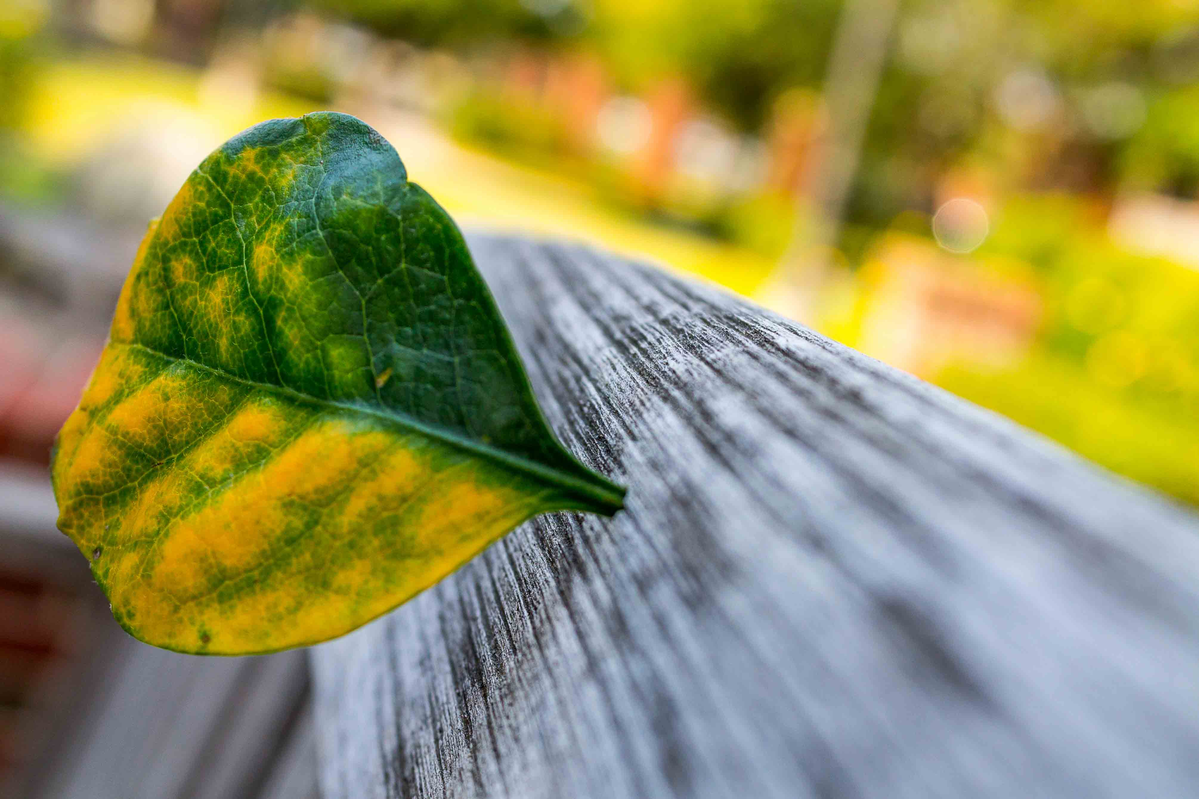 Untitled (Leaf in Bench)