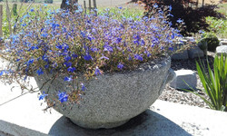Granit Schale Lambach