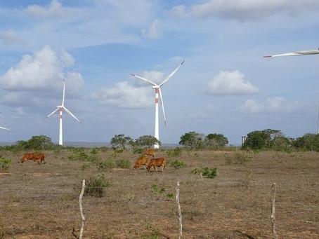 O pouco conhecido impacto negativo da energia eólica no Nordeste