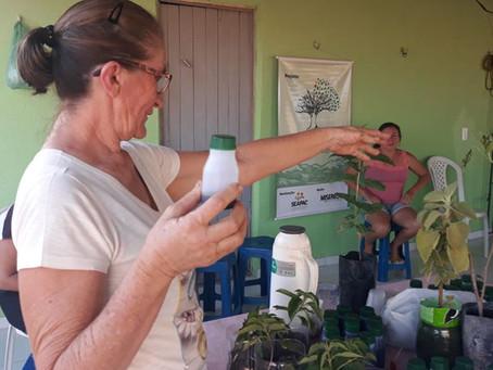 Mulheres partilham receitas caseiras de manipulação de plantas medicinais
