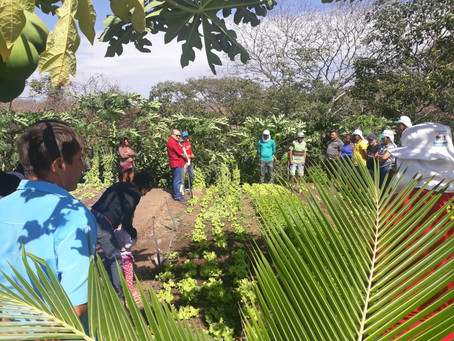 Frente Parlamentar da Agroecologia será lançada em Brasília