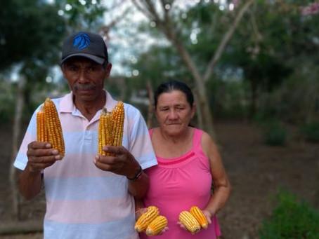 Pesquisa aponta Borborema como zona de conservação e descobre quatro raças de milho endêmicas