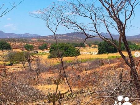 Supressão vegetal da bacia hidráulica da barragem de Oiticica, preocupa movimento e moradores
