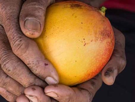 Cadeia de frutas no Nordeste mantém trabalhadores entre os 20% mais pobres