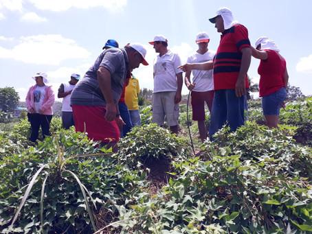 Famílias conhecem experiências agroecológicas de duas UPFs de São Miguel