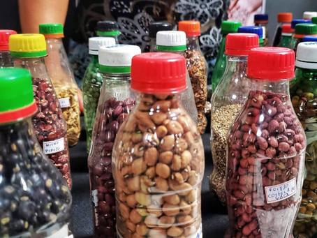 Bancos de Sementes são resistência da agricultura familiar pela agrobiodiversidade